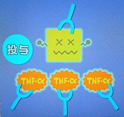抗TNF-α抗体製剤